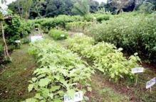 BIG-garden.jpeg