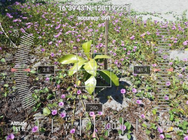FEED-KARPOS-BOTONG-Planting-Urbiz-271020191