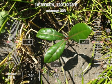 FEED-KARPOS-BOTONG-Planting-Urbiz-2710201912
