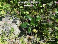 FEED-KARPOS-BOTONG-Planting-Urbiz-271020193