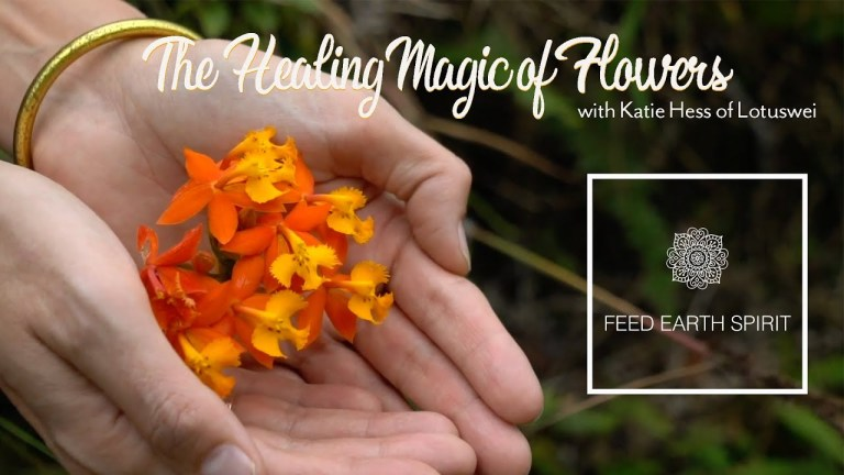 The Healing Magic of Flowers with Katie Hess of LOTUSWEI