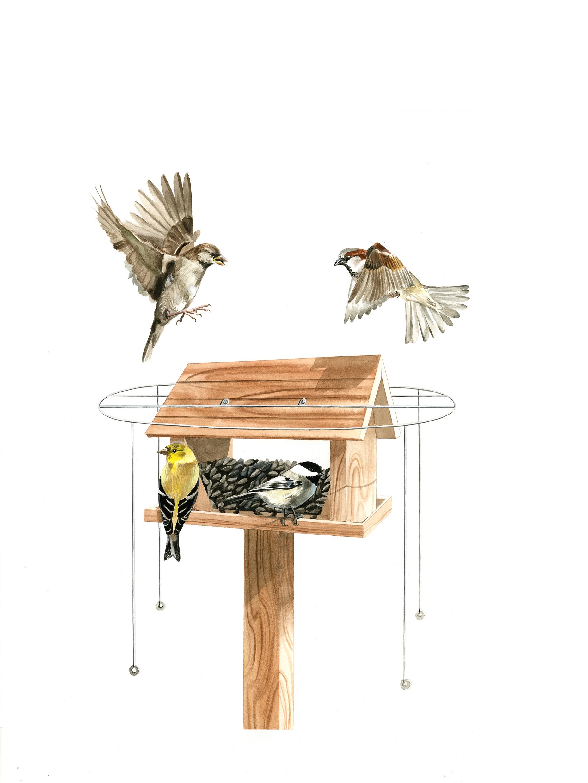 Do feeder halos keep House Sparrows at bay? - FeederWatch