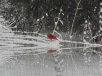 Backyard Bird Paradise - FeederWatch