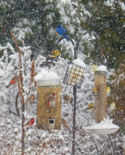 Backyard Bird Paradise
