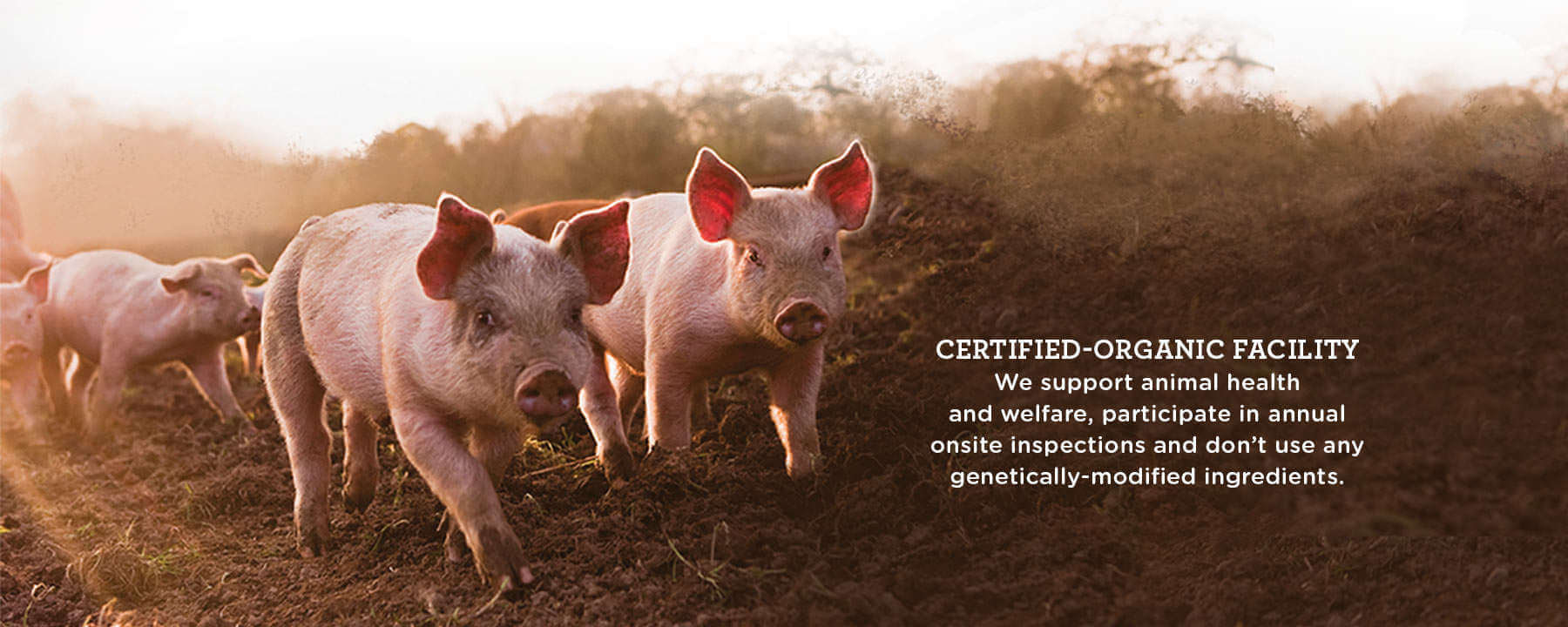 Pigs-Organic Livestock Feed-Feedex Companies