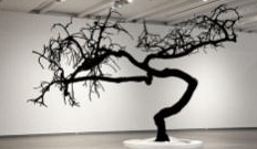 dead avocado tree in museum