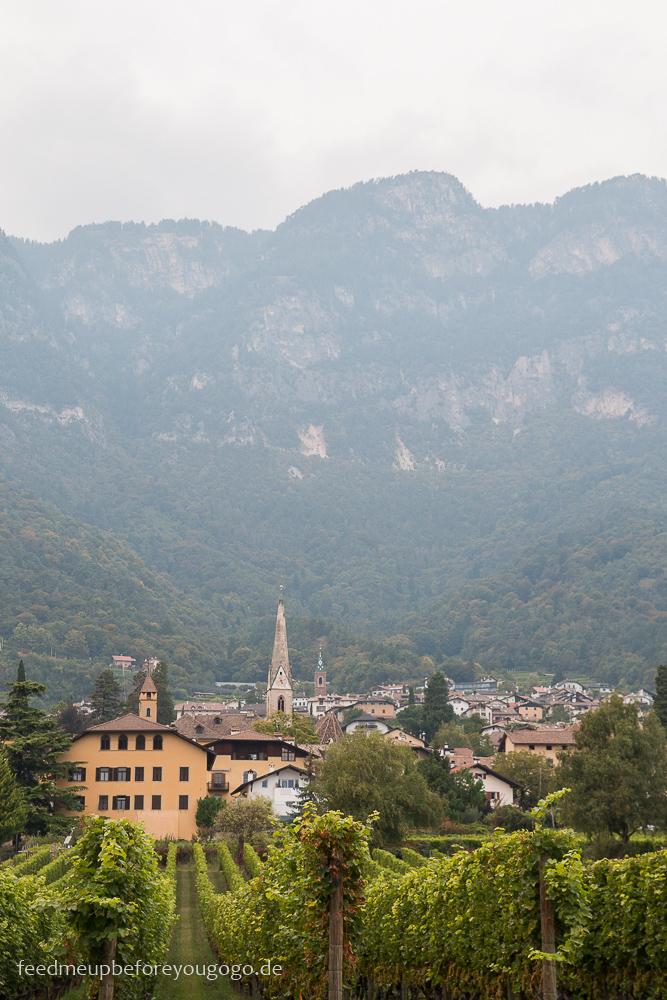 Rebstöcke Kaltern Südtirol Italien Feed me up before you go-go