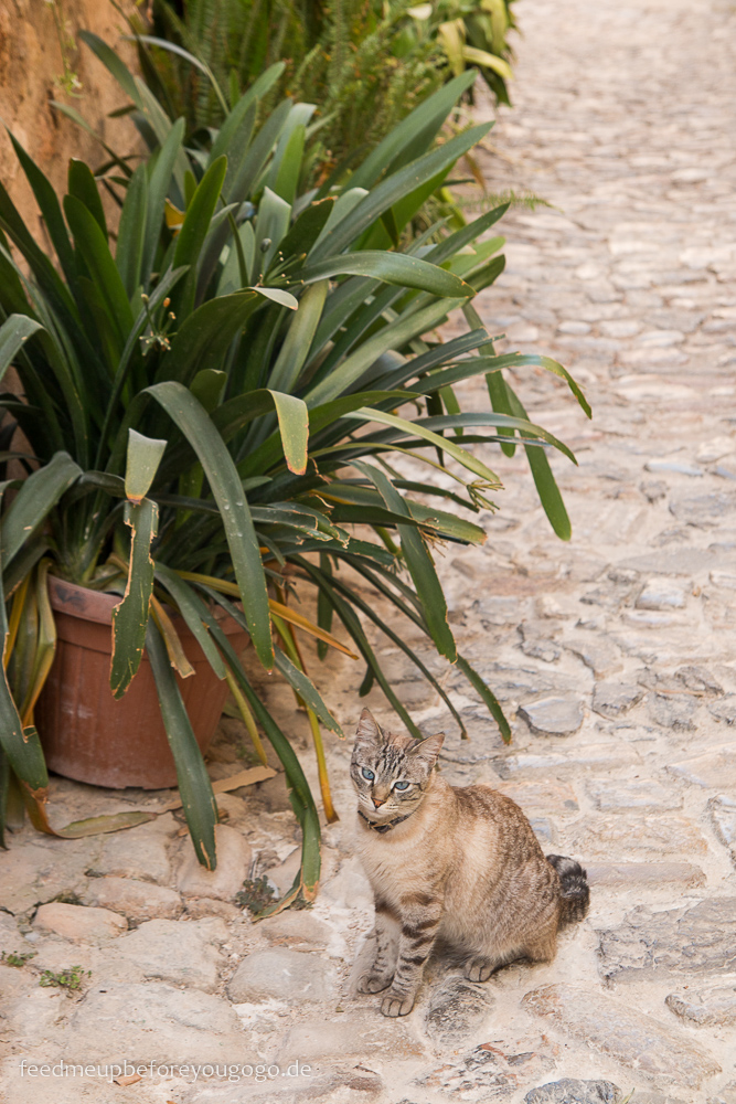 Mallorca Food & Travel Guide - die schönsten Bergdörfer Valldemossa Katze Feed me up before you go-go