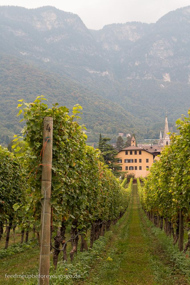 Kaltern Blick auf die Weinberge Südtirol Italien