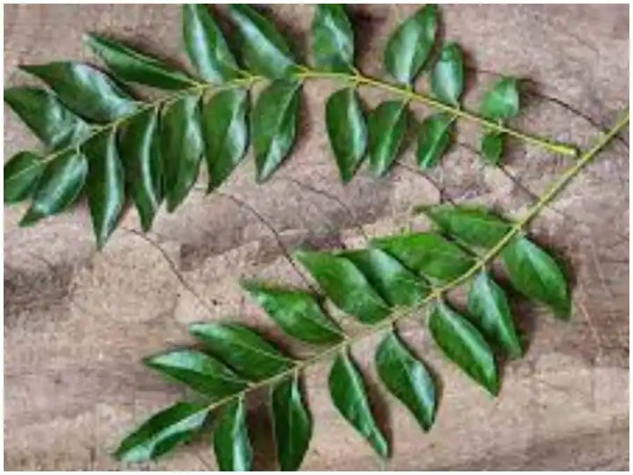 Weight Loss: Drink curry leaf juice to lose weight, the digestive system will be strong
