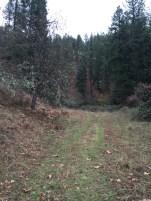 The logging trail begins.