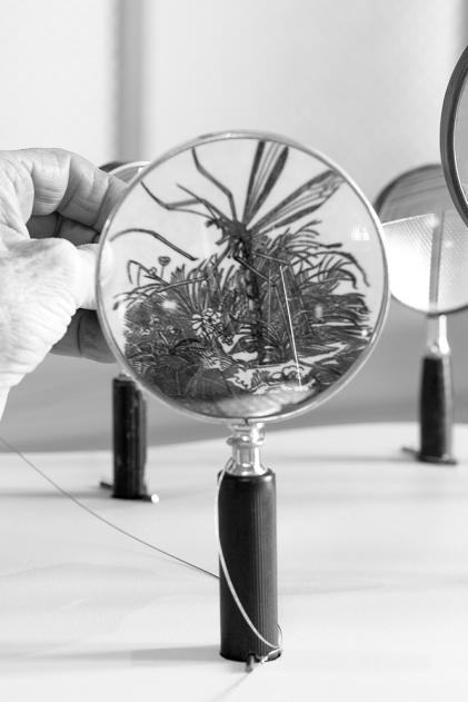 Crane-Fly-under-magnifier