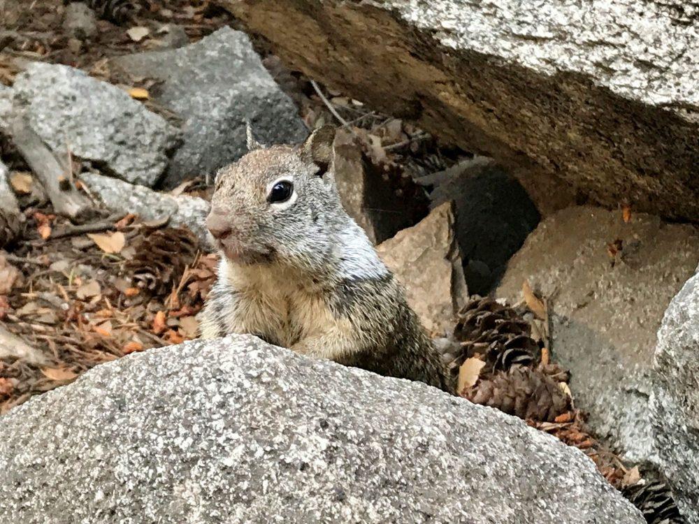 Squirrel on the Mist Trail