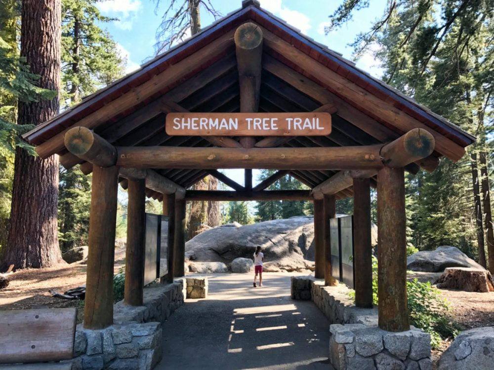 Beginning of Sherman Tree Trail