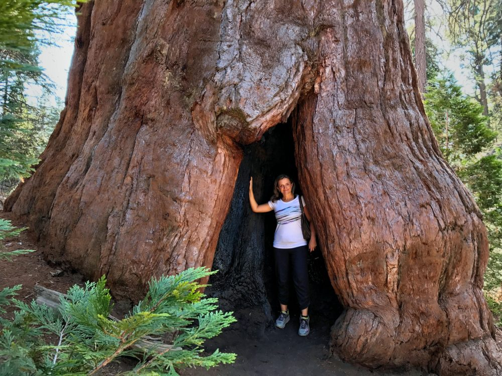Giant Sequoia in Kings Canyon National Park