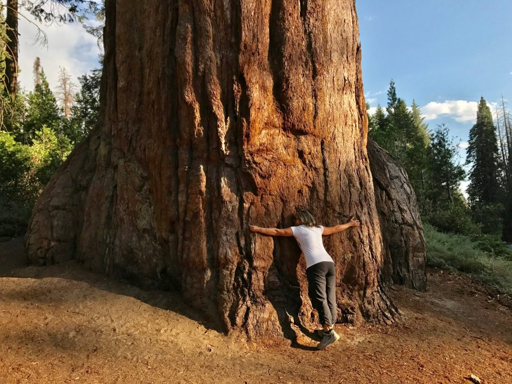 Hugging a Giant Sequoia