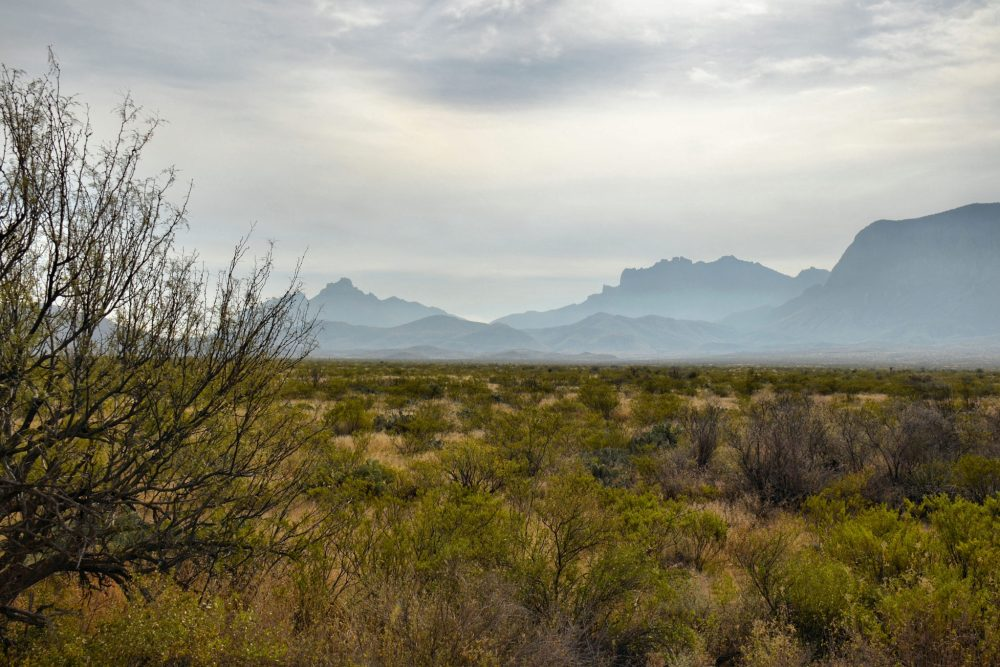 Jagged peaks near the west entrance to Big Bend