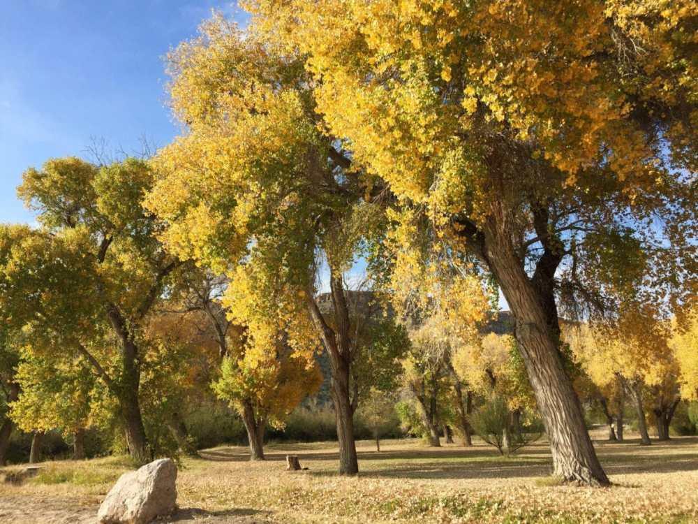 Fall trees near Daniels Ranch