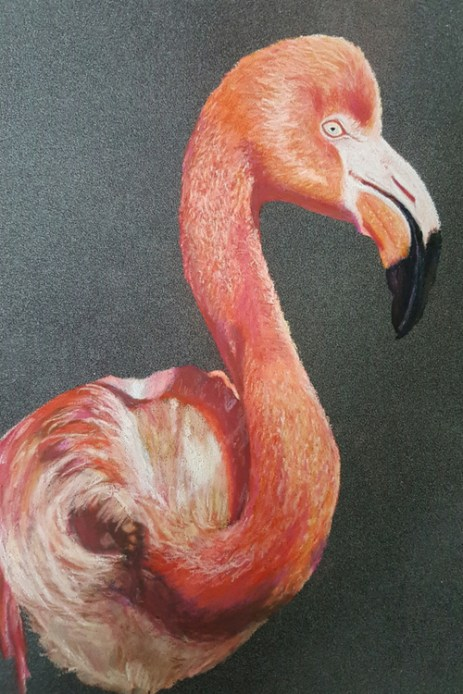 A handrawn picture of a pink flamingo