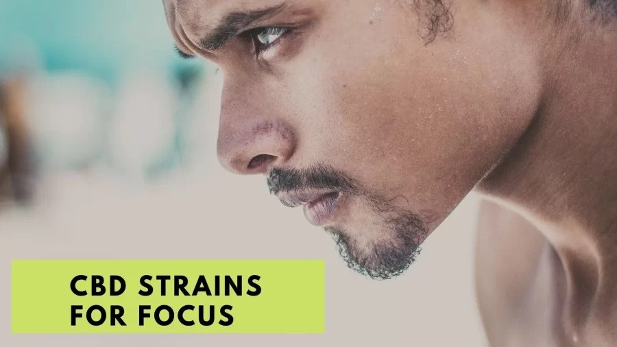 Best strains for focus