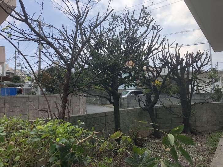 沖縄で木の枝を捨てる