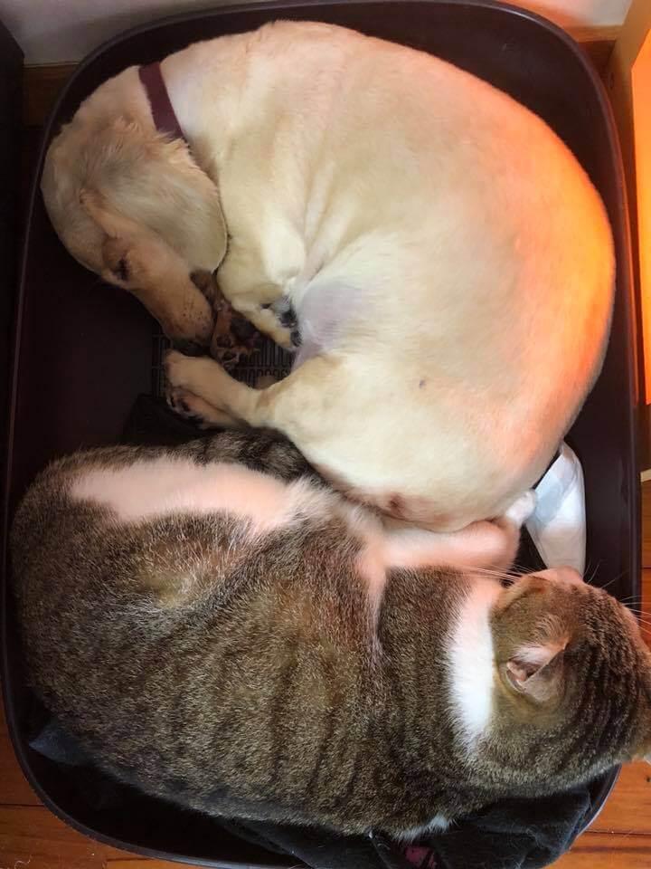 犬と猫が寝ている