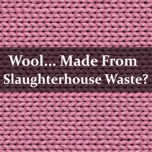 Would You Wear Wool Made from Slaughterhouse Waste?