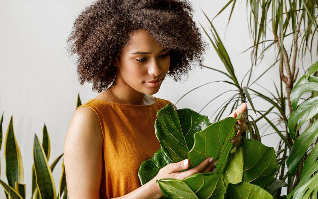 Les bienfaits des plantes sur la santé et le bien-être