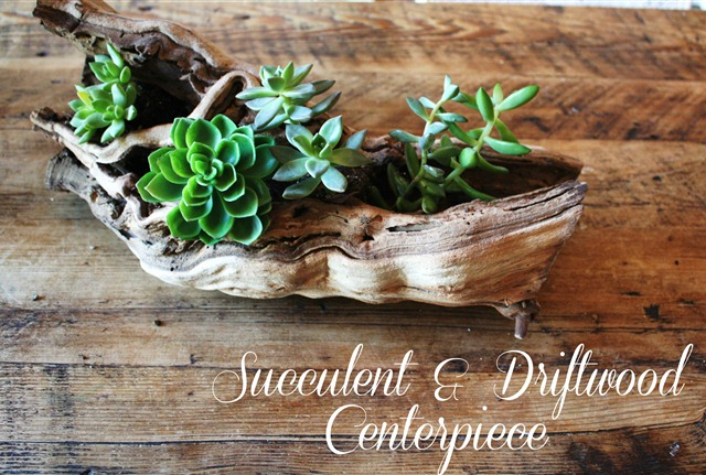 Unique Succulent Driftwood Planters That You Will Love