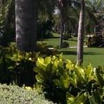 Farallon grounds
