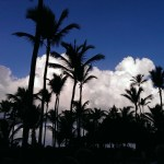 Pre-storm palms