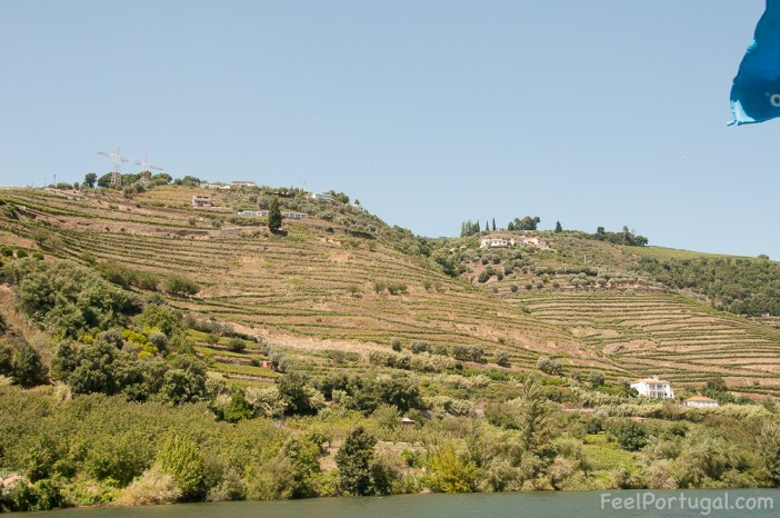Douro Valley slope with vineyards