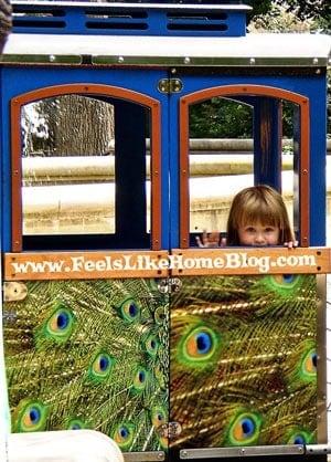 Train Ride at the Philadelphia Zoo