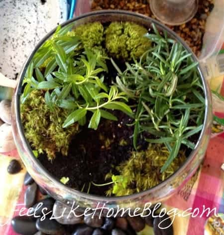 Awesome How To Make A Terrarium