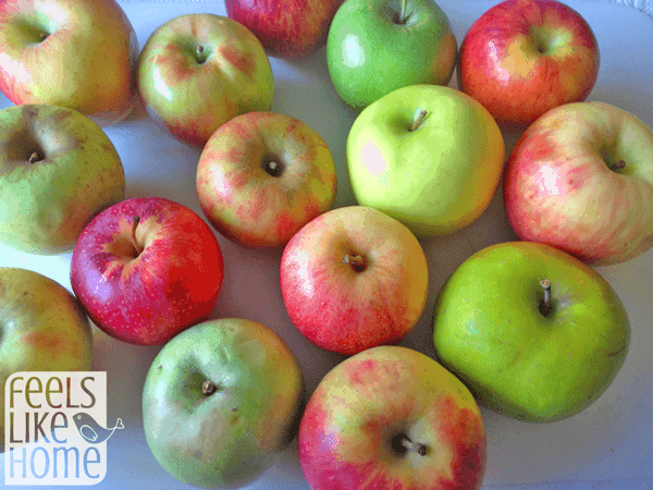 Apple Taste Test Activity - Elementary Math & Science Lesson
