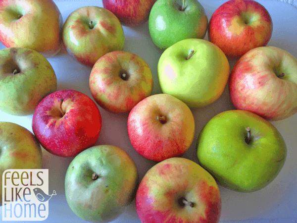 apple taste test activity  an elementary math  u0026 science