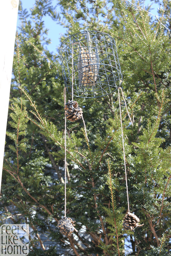 A suet feeder hanging next to a pine cone bird feeder