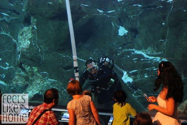 Adventure Aquarium in Philadelphia review - Diver