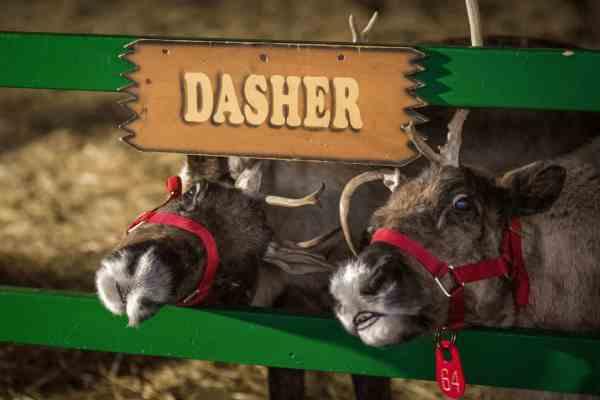 hersheypark-christmas-candylane-reindeer