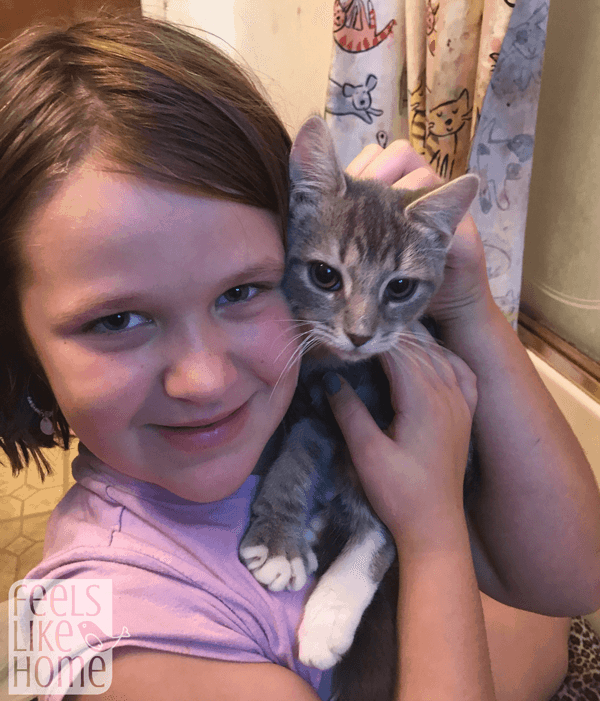 A kitten sitting on top of a little girl posing for a picture
