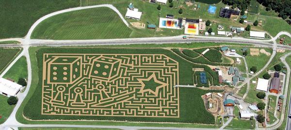 A corn maze