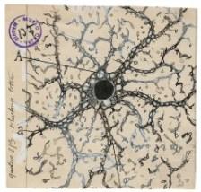 Un Astrocito del Hipocampo Humano