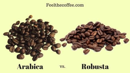 Arabica Coffee vs Robusta Coffee: What's the Difference? | FeelTheCoffee.com