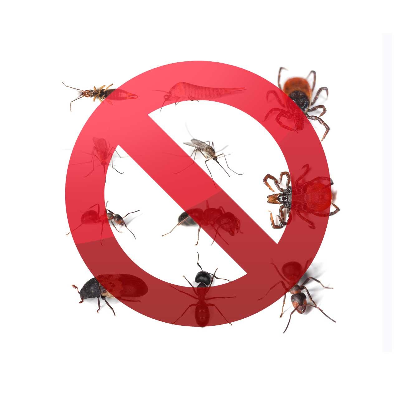 Termitecom Termites Termite Control Options