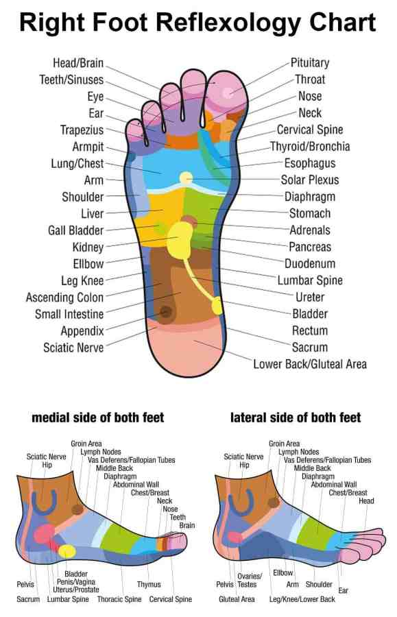 Right Foot Reflexology Chart