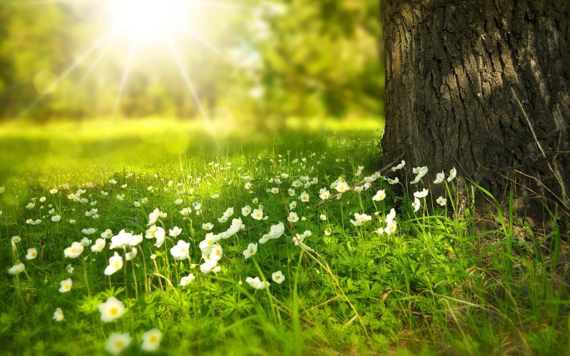 Frühling: Gewissheiten