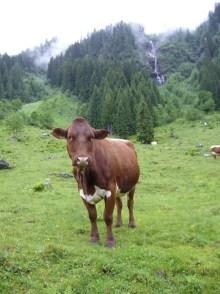 Poser-Kuh