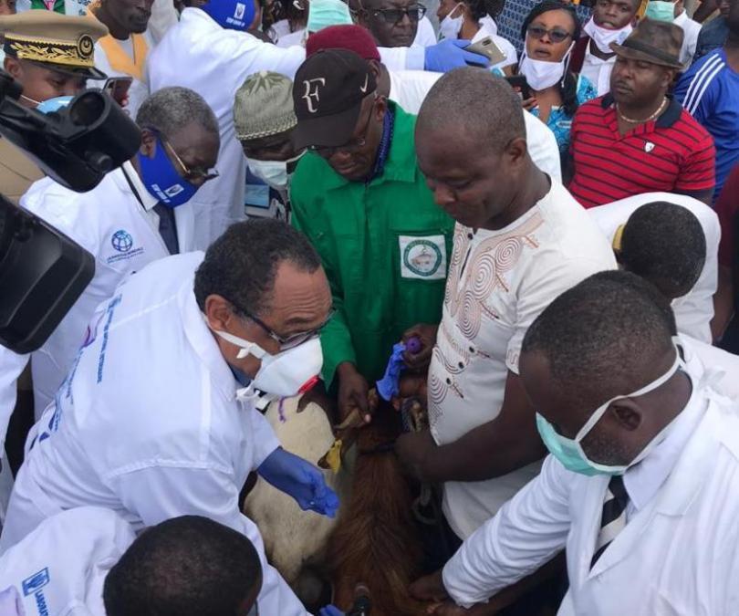 NGOMEZAP: Lutte contre la peste des petits ruminants