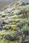 1165_woolshed_creek