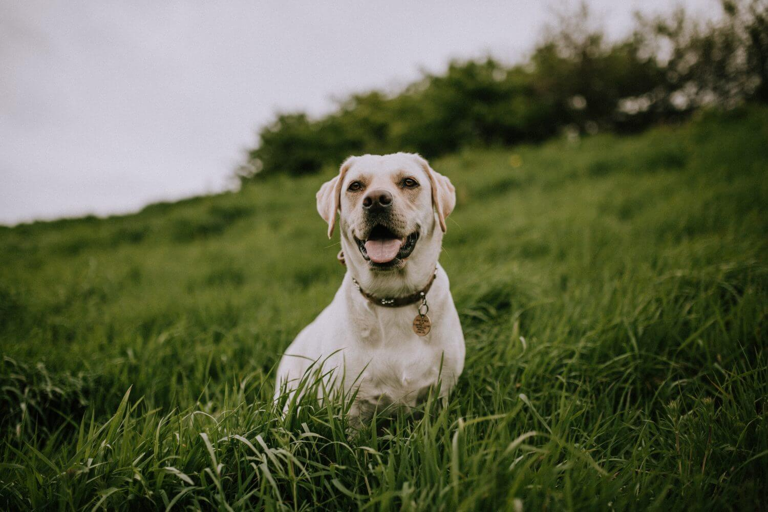 Therapy Dogs – The Different Types and Their Benefits